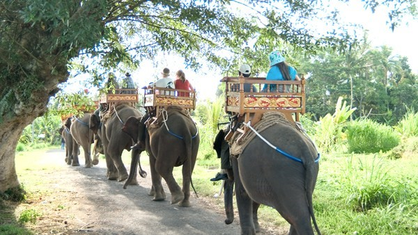 Elephant Ride - Bali Elephant Camp 4