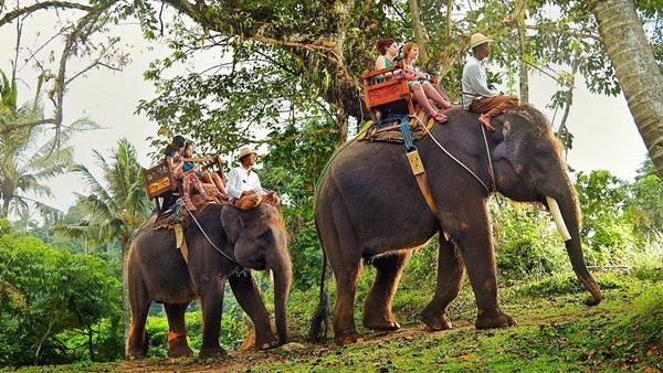 Elephant Ride - Bali Elephant Camp 6