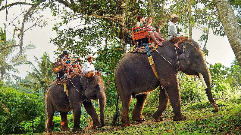 Elephant Ride - Bali Elephant Camp 1