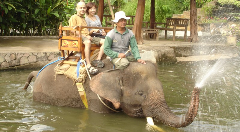A Day Tour Combination to Bali Swing Accompanied by Our English Bali Driver-Guide. 5