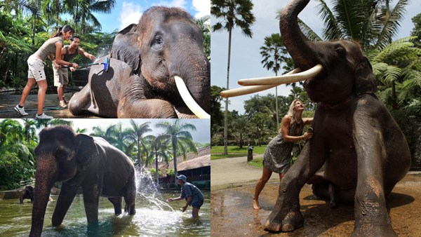 Bathing the Elephant 3