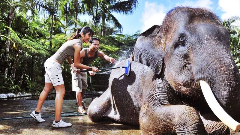A Day Tour at Mason Elephant Park with Experience Driver Bali 4