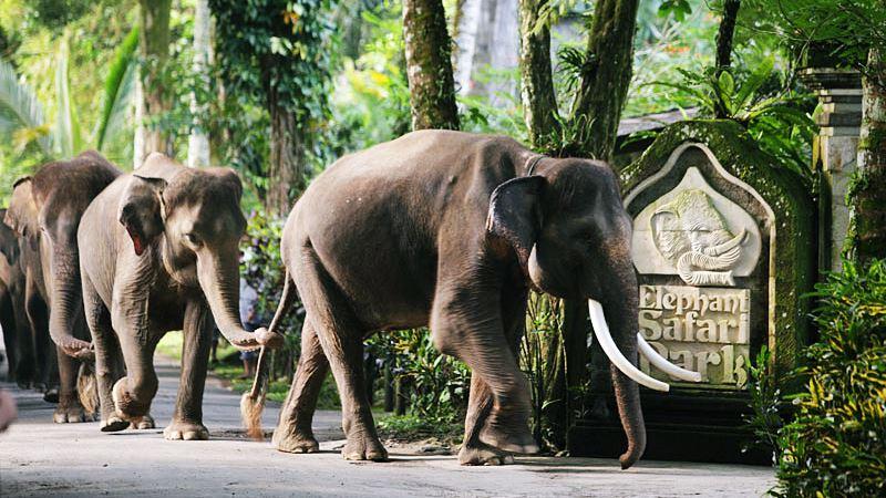 Elephant Safari Park Taro Ubud 2