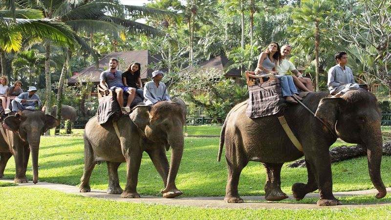 A Day Tour at Mason Elephant Park with Experience Driver Bali 2