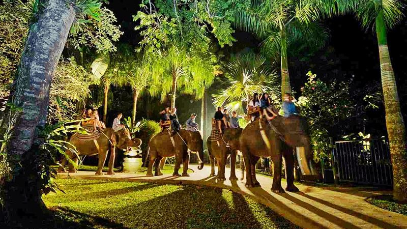 A Day Tour at Mason Elephant Park with Experience Driver Bali 5