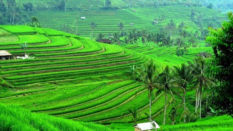 Great 8 Days Bali Land Tour Package 12