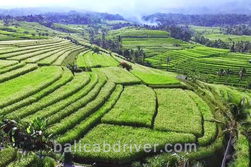 The Terrace Rice Field Tours in Bali 2