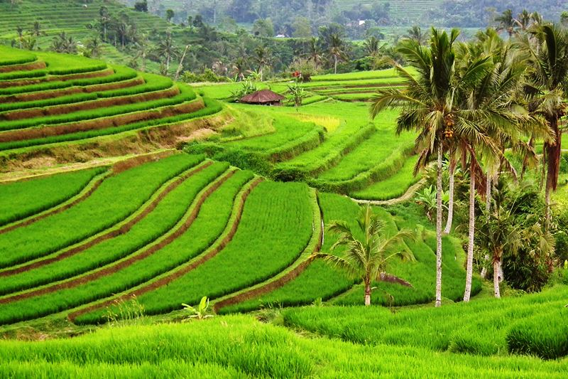 Bali Vacation Tour Tips: Things to Do When Your Visit to Bali Indonesia 4