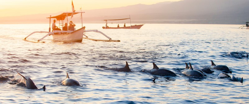 Exciting Experience of Watching Lovina Dolphin Attractions on Bali Island 3