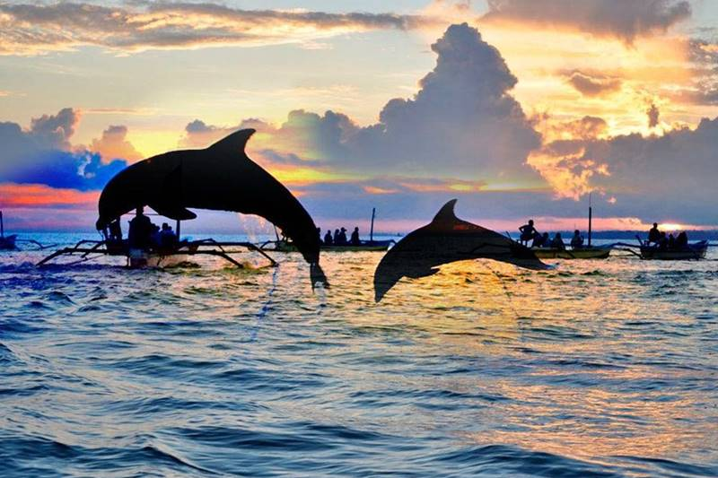 Exciting Experience of Watching Lovina Dolphin Attractions on Bali Island 2