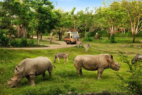 Rhino package price