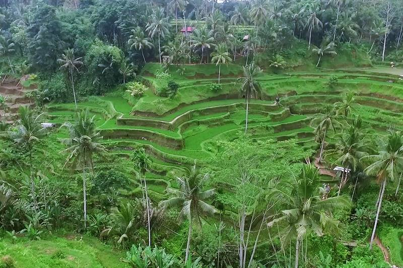Popular Purification Tour Bali 2019-2010 5